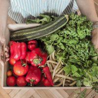 Misija:sunaudoti daržoves